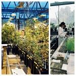 Stephanie_greenhouse